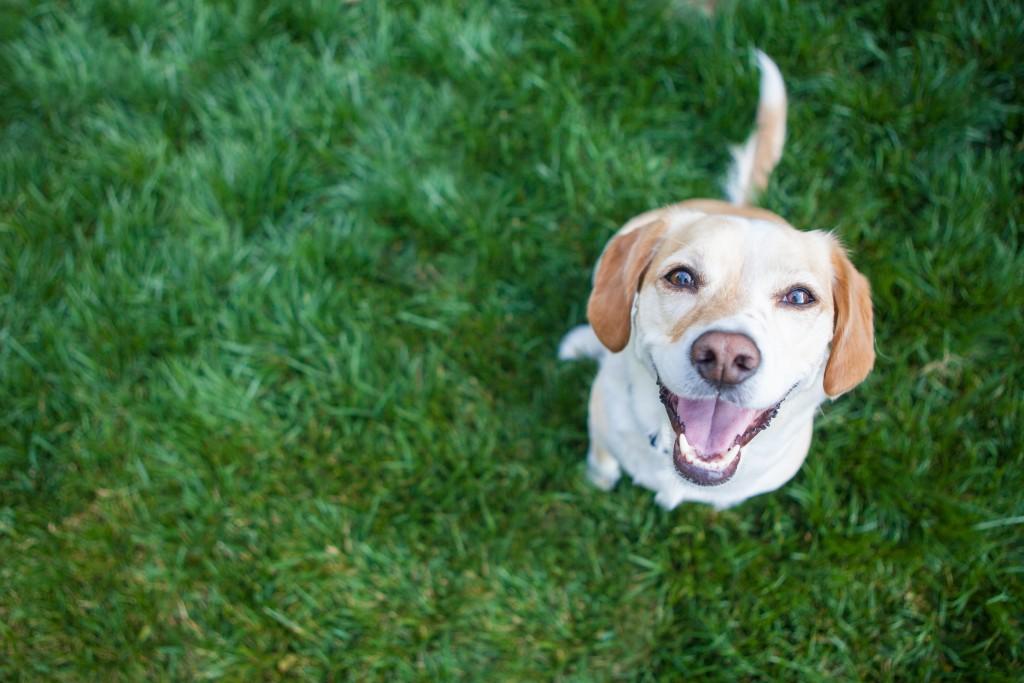 dog smiling upward