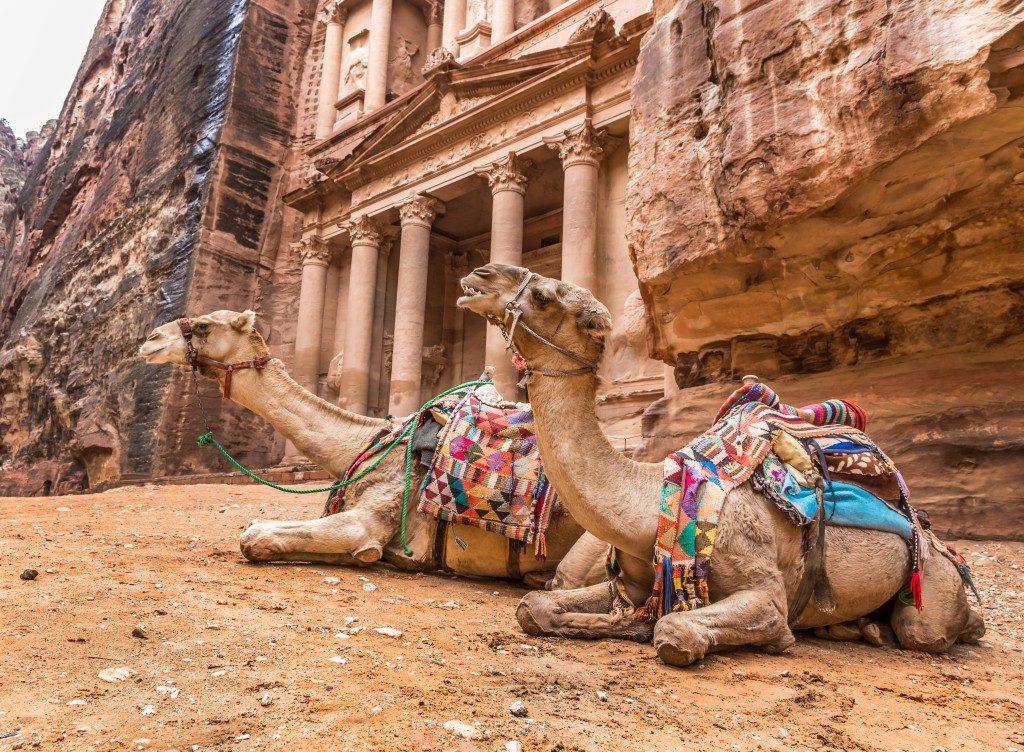 2 camels in Petra, Jordan