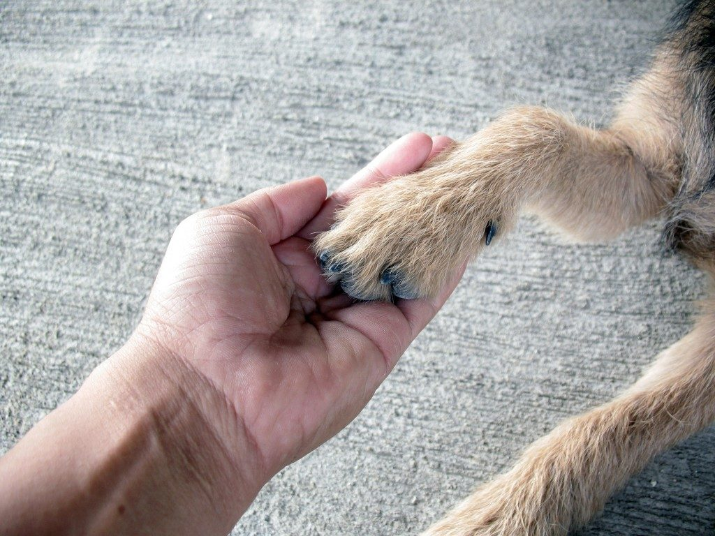 holding dogs hand