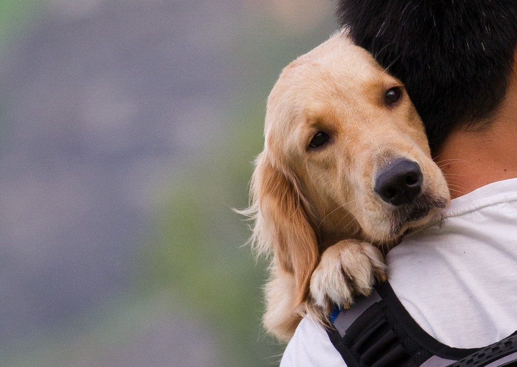 dog being carried