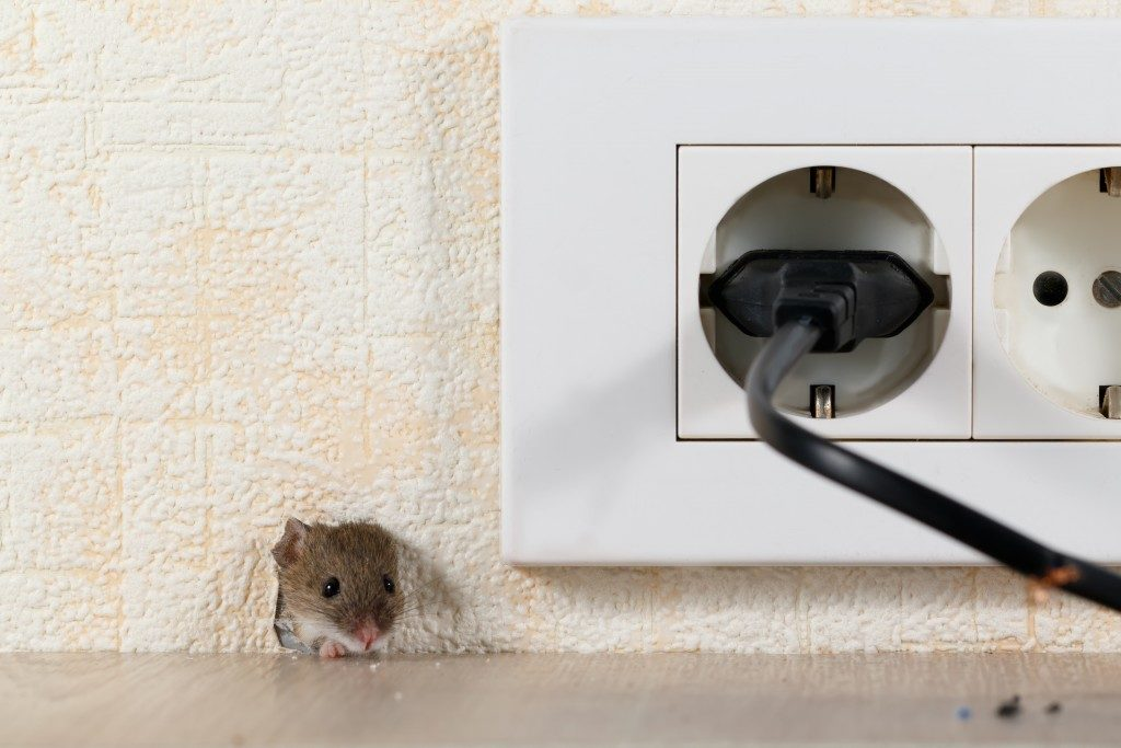 MIce on hole of home's wall