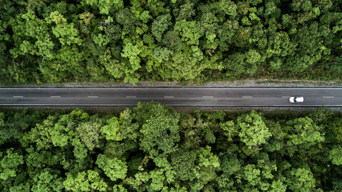 road along a forest of trees