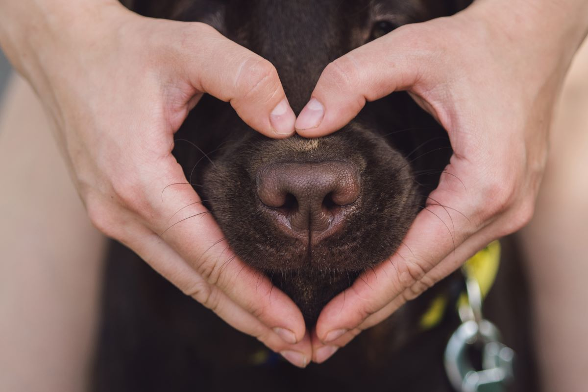 heart sign with hands on dogs nose
